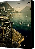 Grill Canvas Prints - Seagulls Canvas Print by Joana Kruse