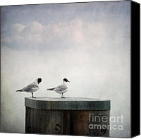 Waterfowl Canvas Prints - Seagulls Canvas Print by Priska Wettstein