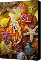 Sea Shells Canvas Prints - Seahorse and assorted sea shells Canvas Print by Garry Gay