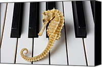 Chambers Canvas Prints - Seahorse on keys Canvas Print by Garry Gay