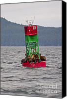 On-the-look-out Canvas Prints - Seals on the Bouy Canvas Print by Darcy Michaelchuk