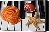 White Starfish Canvas Prints - Seashell and starfish on piano Canvas Print by Garry Gay