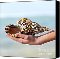 Young Woman Blue Canvas Prints - Seashell in hand Canvas Print by Elena Elisseeva