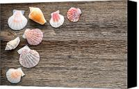 Sea Shells Canvas Prints - Seashells on Wood Canvas Print by Olivier Le Queinec