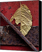 Damp Canvas Prints - Season Of Decay Canvas Print by Odd Jeppesen