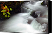 Fall Leaves Canvas Prints - Seasons Rush By Canvas Print by Mike  Dawson