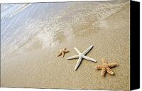 Hawaii Beach Art Canvas Prints - Seastars on Beach Canvas Print by Mary Van de Ven - Printscapes