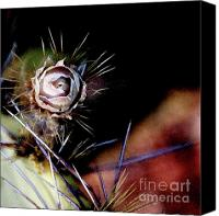 Linda Knorr Shafer Canvas Prints - Sedonas Desert Rose Canvas Print by Linda Knorr Shafer