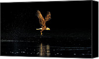 Bald Eagle Canvas Prints - Seeking the Sun -- An Eagles Quest Canvas Print by William Jobes