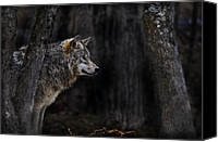 Wolf Cubs Canvas Prints - Sentinel Canvas Print by Michael Cummings