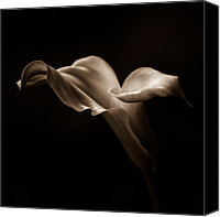 Calla Lily Canvas Prints - Sepia Calla 3 Canvas Print by Robin Konarz