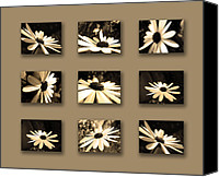 Flora Canvas Prints - Sepia Daisy Flower Series Canvas Print by Sumit Mehndiratta