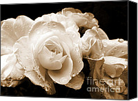 Umber Canvas Prints - Sepia Roses with Rain Drops Canvas Print by Jennie Marie Schell