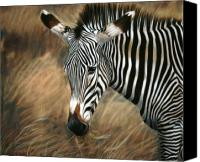 Zebra Pastels Canvas Prints - Serengeti Zebra Canvas Print by Carol McCarty