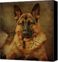 Alsatian Canvas Prints - Serious Canvas Print by Sandy Keeton