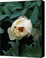 Debbie Canvas Prints - Sexy Peony Canvas Print by Deborah  Crew-Johnson
