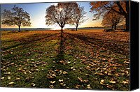 Autumn Canvas Prints - Shadows Canvas Print by Bill  Wakeley