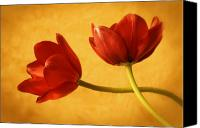 Two Red Tulips Canvas Prints - Shall We Dance Canvas Print by Colleen Farrell