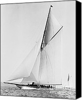 Yachts Canvas Prints - Shamrock III 1903 BW Canvas Print by Padre Art