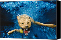 Diving Dog Canvas Prints - Shark Attack Canvas Print by Jill Reger