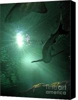 Swim Canvas Prints - Shark Tank I Canvas Print by Elizabeth Hoskinson