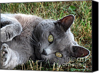 Adore Photo Canvas Prints - Shasta Cat Canvas Print by Darleen Stry