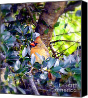 Red Cardinal Canvas Prints - She Waits Canvas Print by Karen Wiles