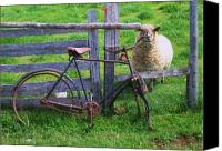 Fence Special Promotions - Sheep And Bicycle Canvas Print by Seon-Jeong Kim