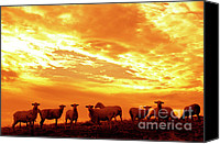 Family Farm Canvas Prints - Sheep at Sunrise Canvas Print by Thomas R Fletcher