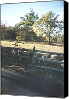 Thelma Harcum Canvas Prints - Sheep Gather Near Fence Canvas Print by Thelma Harcum