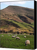 Grazing Canvas Prints - Sheep Grazing In Peak Canvas Print by Michelle McMahon