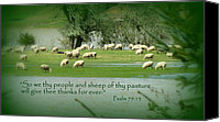 Floods Canvas Prints - Sheep Grazing Scripture Art Canvas Print by Cindy Wright