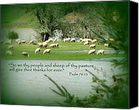 Floods Canvas Prints - Sheep Grazing Scripture Canvas Print by Cindy Wright