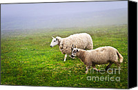 Foggy Canvas Prints - Sheep in misty meadow Canvas Print by Elena Elisseeva