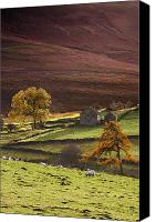 Farm Houses Canvas Prints - Sheep On A Hill, North Yorkshire Canvas Print by John Short