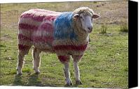 Red White Blue Canvas Prints - Sheep with American flag Canvas Print by Garry Gay