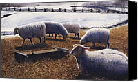 Photo-realism Canvas Prints - Sheepish Canvas Print by Denny Bond