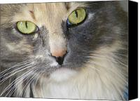 Abstract Cat Portrait Canvas Prints - Shelbys Eyes 4 Canvas Print by Lenore Senior