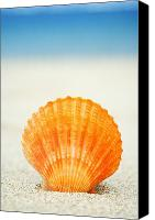 Tide Canvas Prints - Shell on Beach Canvas Print by Mary Van de Ven - Printscapes