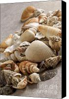 Sea Animals Canvas Prints - Shellfish shells Canvas Print by Bernard Jaubert