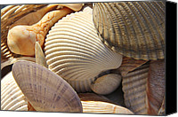 Sea Shells Canvas Prints - Shells 1 Canvas Print by Mike McGlothlen