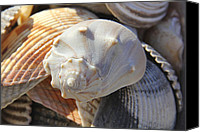 Sea Shells Canvas Prints - Shells 2 Canvas Print by Mike McGlothlen