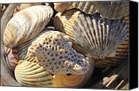 Sea Shells Canvas Prints - Shells 3 Canvas Print by Mike McGlothlen