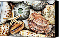 Urchin Canvas Prints - Shellscape Canvas Print by Kaye Menner