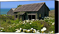 Lilies Canvas Prints - Shepherss shack Canvas Print by Garry Gay