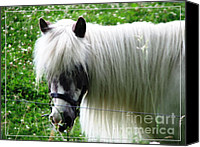 Miniature Effect Canvas Prints - Shetland Pony with Oil Painting Effect 2 Canvas Print by Rose Santuci-Sofranko