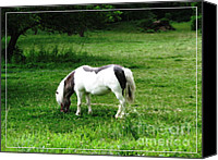 Miniature Effect Canvas Prints - Shetland Pony with Oil Painting Effect Canvas Print by Rose Santuci-Sofranko