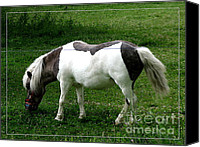 Miniature Effect Canvas Prints - Shetland Pony with Watercolor Effect Canvas Print by Rose Santuci-Sofranko