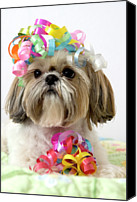 Creativity Canvas Prints - Shih Tzu Dog Canvas Print by Geri Lavrov