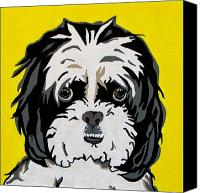 Dogs Painting Canvas Prints - Shih tzu Canvas Print by Slade Roberts